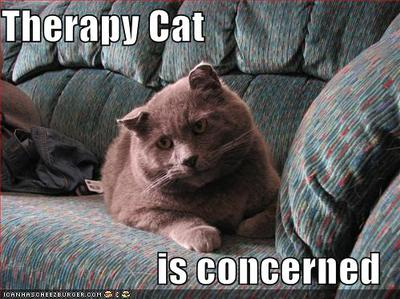 Funnypicturestherapycat
