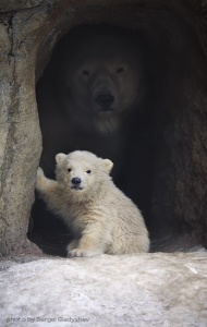 Safe-Baby-Polar-Bear